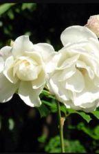 Roses by manda___lynn