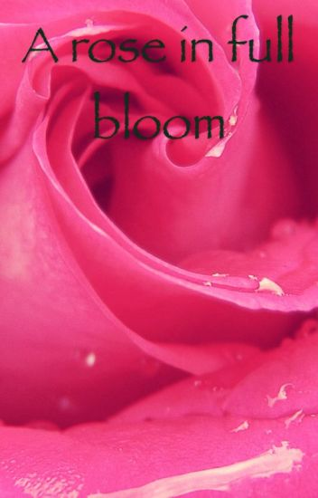 A Rose in Full Bloom