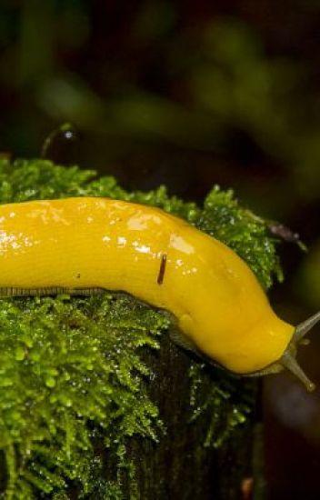 Banana Slug Evenings