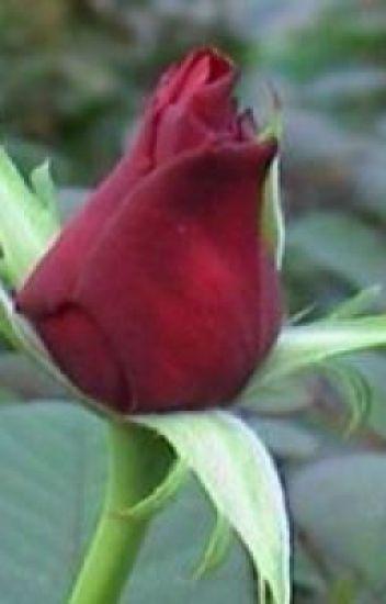 Flower Bud Haiku