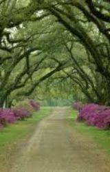 Pathway by Biggie_11