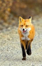 Running Fox by mikinly4