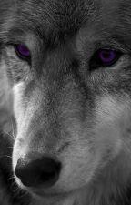 The White Werewolf with Purple Eyes by SweetlyBroken13