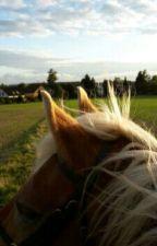 Die Pferde vom Friesenhof by lixdlu