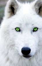 White wolf by differentone_11