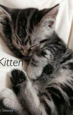 Kitten by stewwy