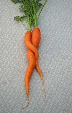 Lettuce Begin... by nicolebq