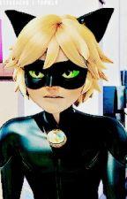 His Kitten Chat Noir/ Adrien X Reader by -DeathTheKid