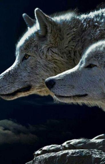 wolf find her love