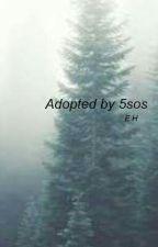 Adopted by 5sos by lukehemmings4eva22
