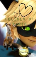 Chat Noir x Reader (OC) by look_out_reality