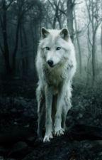 Silver(Twilight/Jasper) by Black_ShadowDragon