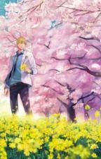 Sakura No Ame by AkagiS