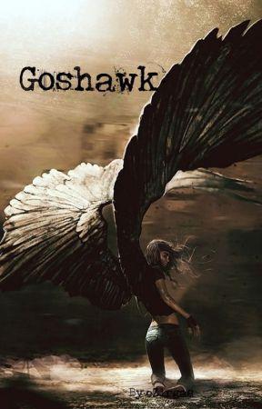 Goshawk by Zirgas