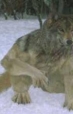 Deník retardovaného vlkodlaka by zanda911202