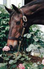 Equestrian Girl{Italian} by martaamariani