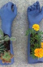 bloom. by seasonalovex