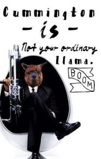 Cummington is not your Ordinary Llama.