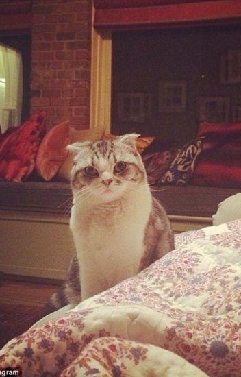 Meredith Grey the Matchmaker [Kaylor]