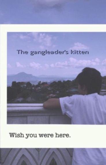 The gangleader's kitten