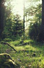 Prinz Kaspian von Narnia by campfit