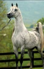 Taking Chances: a horse story by hi_im_karson