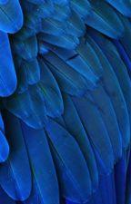blue jay | janiel by twinklingjoey