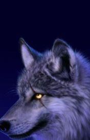 Wolf packs rp by shade_and_shadowwolf