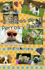 razas de perros y gatos by Fereni-reyes