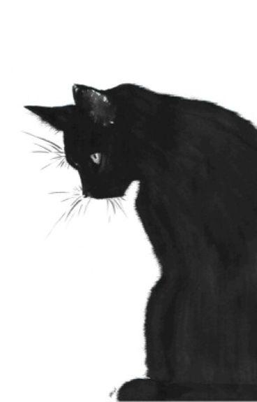 My neko {chat noir x reader}