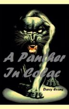 A Panther in Colac by DarcyEvans