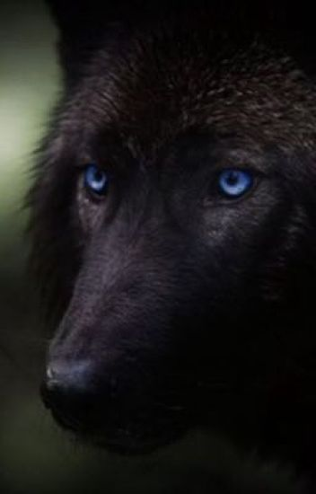 The Magic Black Wolf