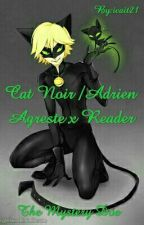The Mystery Doe // Cat Noir/Adrien Agreste x Reader [ON HOLD.. I APOLOGIZE] by -infernomyg-