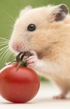 A Hamsters Perspective by 1SaltyPopcorn1