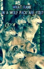 What Rank in a Wolf Pack Are You? QUIZ by ScarletWolf20
