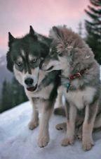 Волчица из болот by Alana_77