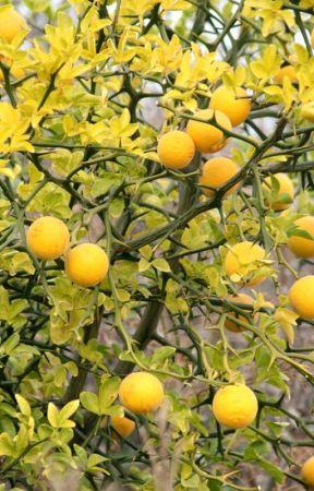 Moi, la tart au citron, notre vie comune by La_Chimere