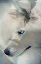 El alfa de lomo blanco. by Eliazz17