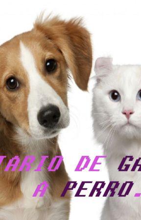 Diario De Gato A Perro Amoramistadodio Wattpad