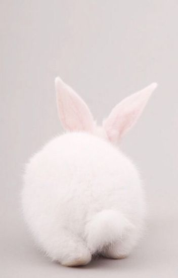 [Khải Nguyên] [Edit] Thỏ trắng bé nhỏ, trắng a trắng (HOÀN)