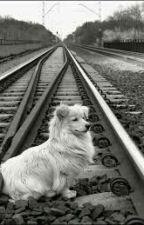 O Psie Który Nie Jeździł Koleją by Malwixxx