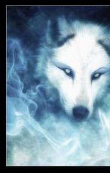 going to a bording school.a werwolf bording school