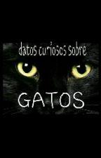 Datos Curiosos Sobre Los Gatos by KathalinaPereiraPave