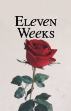 eleven weeks ↹ Shawn Mendes  by ILLUMINATE-