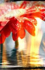 Fire Daisies by tardis_lover_