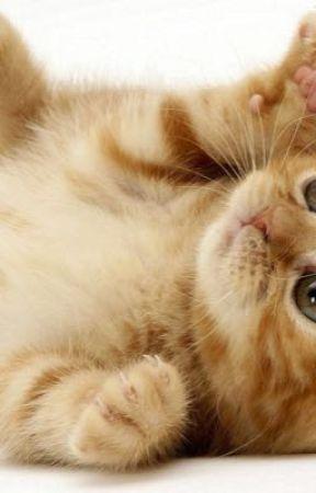 The little cute kitten by DelReysDiamonds