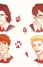 Young marauders xreader one shots! by pegasusgirl8