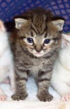 The kitten of my life by KittyCrafts