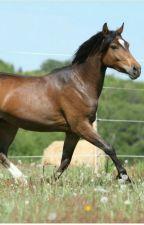 Elena - ein Leben Für Pferde -Band 5 ❤ by Backofenpommes