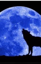Moonwish  by mysjanimals